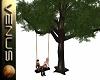 ~V~Tree Swing