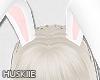 HK♠Bunny Ears