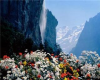 *L* Mountain Flora BG