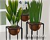H. Trio House Plants