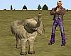 Animated Elephant Calf