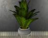 *N* Plant  2