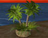 Potted Palm Fern