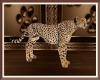 Kingdom Cheeta