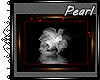 [P] White Rose