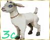 [3c] Baby Goat