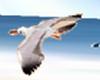 Animated Beach Seagulls