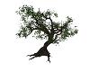 Witch's Tree