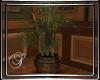 (SL) T Study Palm Plant