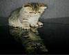 ~Oo Kitten Reflection