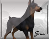 Dog  ~ Doberman