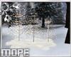Winter Light Trees
