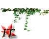 [IT] Devils Ivy Vine