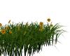 Grass w Flowers