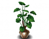 AwesomePlant2