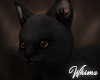 Witch's Black Cat