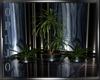 Night-Club (Plants)
