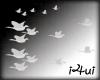 flying pidgins