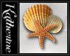 *K* Starfish n seashell1