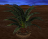 Small Wicker Potted Palm
