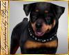 I~Rottweiler*Spike