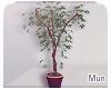 Mun | Beauty Plant '