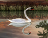 ReflectiveLoveSwans
