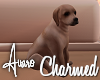 Charmed Pup