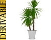3N:DERIV. Big Plant
