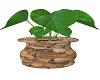 STONE POT PLANT