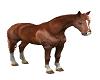 Horse animated