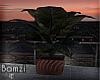 .B. Penthouse plant