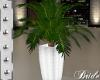 WEDDING PALM PLANT