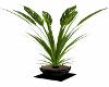 Black Potted Plant Radio