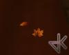 ID* Autum Fall Leaves..