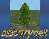 WE Evergreen Bush