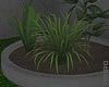 ᴍ| Little Garden.