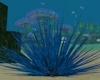Sea Urchin Echinoidea