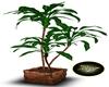 Plant Garda