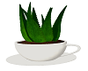 Cup Coffee Plant Pot