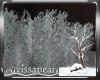 Winter Night Bush