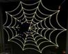 SPIDER WEB (KL)