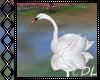 !V* P Swan