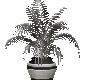 slive bk club plant