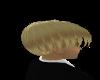 Brendon - Blonde