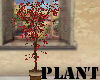 (A) Plant~Red Laef Tree
