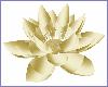 Golden animated Lotus
