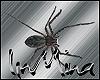 .Im. Animated Spider