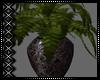 Rainy Plant v2