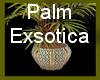 !~TC~! Palm Exsotica Gf